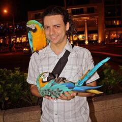 Parrots on the Kalakaua Ave