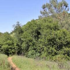 Homestead Trail, Lake Berryessa