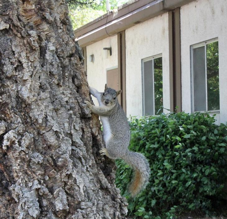 Squirrel at UC Davis