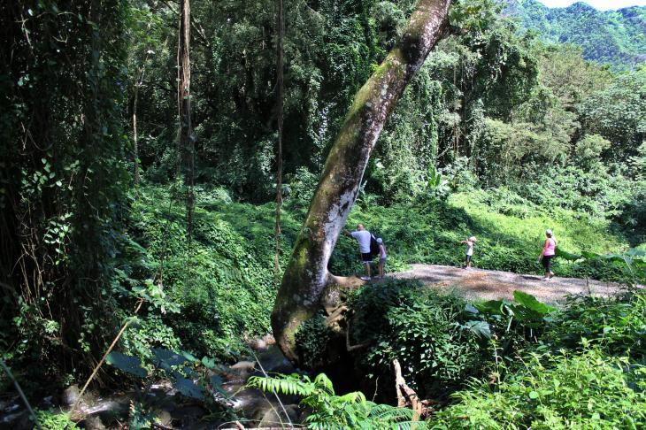 Hike to Manoa Falls