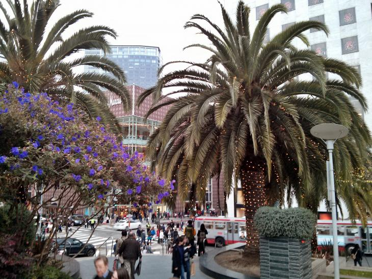 Decorated Palm Trees at Union Square