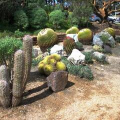 Cactuses at Balboa Park