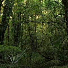 "The native ""bush"" (temperate rainforest)"