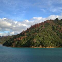 Te Iro Bay, Marlborough Sounds