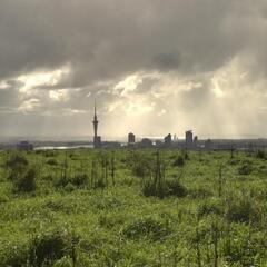 Meadow on Mount Eden with a nice view of Auckland