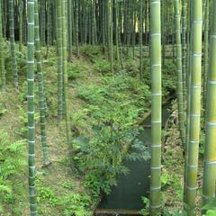 Bamboo Forest at Tenryuji Temple