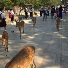 Deer at Todaiji Temple