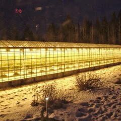Geothermal Greenhouse Tomato Farm