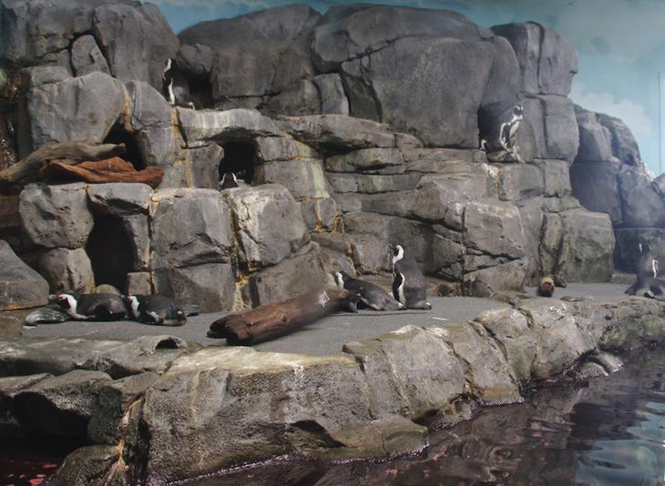 African Penguins, Monterey Bay Aquarium